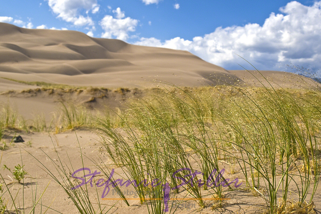 Leben am Rand der Dünen