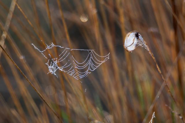 Spinnennetz im Moor | Morgens im Großen Torfmoor bei Lübbecke entdeckt.