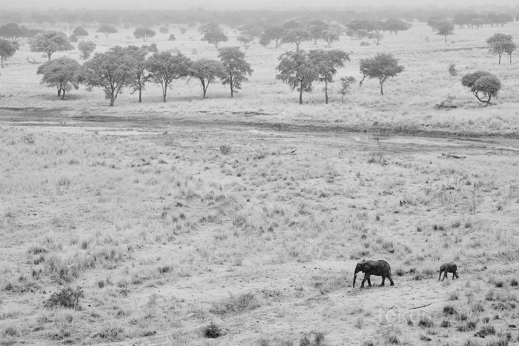 Elefanten in den weiten Afrikas | Eine Elefantenkuh mit ihrem Kalb in den Weiten Afrikas.