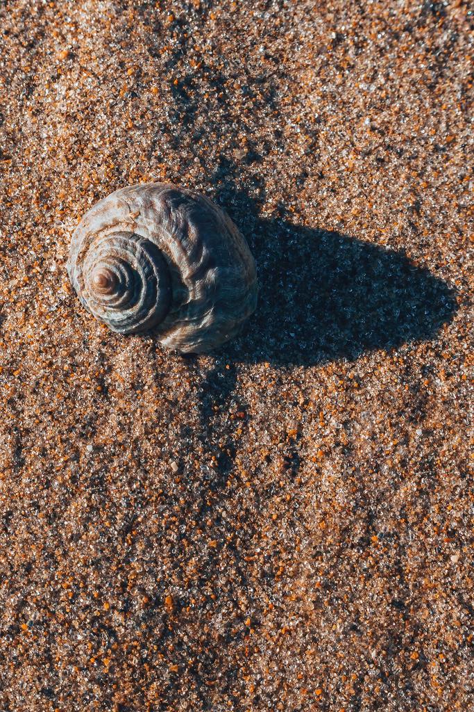 Muschel am Strand von Neuseeland | Muschel am Strand von Neuseeland