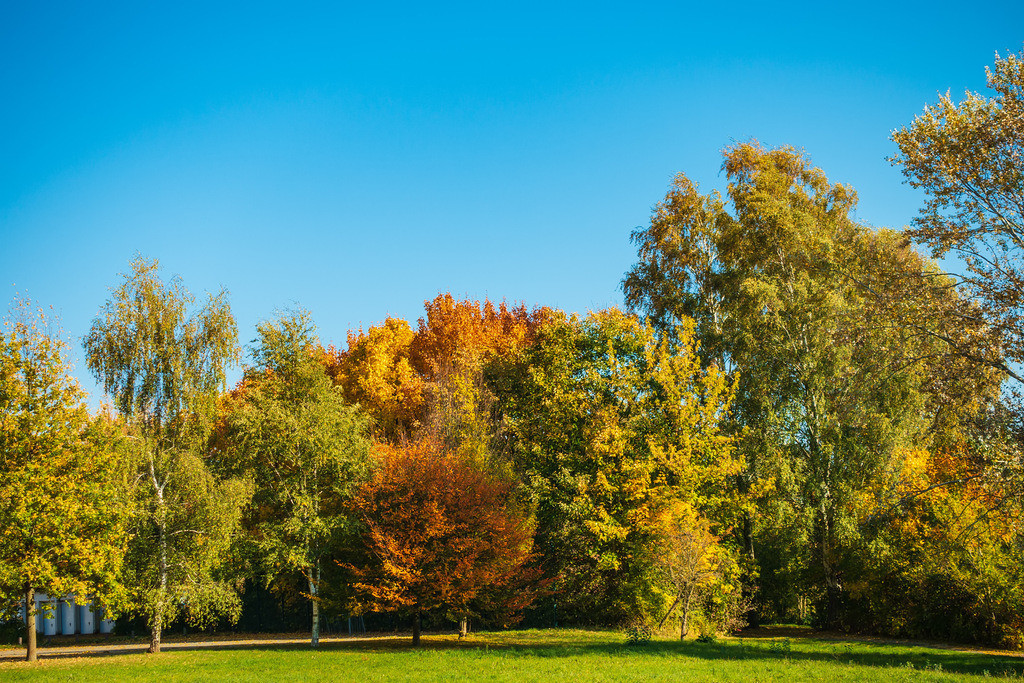 Herbstlich gefärbte Bäume mit blauen Himmel | Herbstlich gefärbte Bäume mit blauen Himmel.
