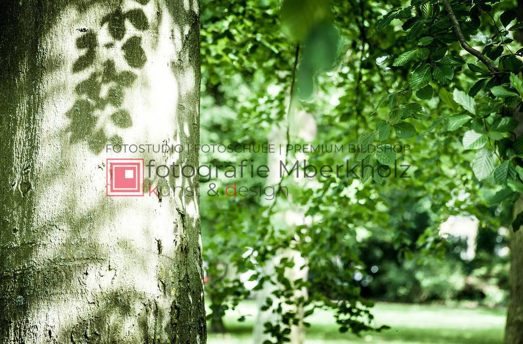 _Marko_Berkholz_mberkholz_MBE9381   Die Bildergalerie Natur des Warnemünder Fotografen Marko Berkholz zeigt Motive unser vielfältigen und abwechslungsreichen Landschaften, Tier- und Pflanzenwelt.