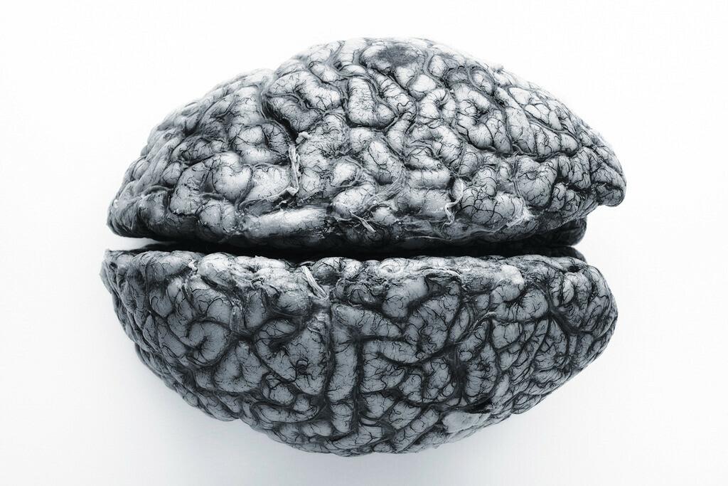 Gehirn, Deutscher Rohstoff | Menschliches Gehirn