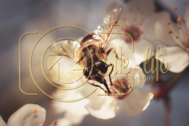Fleißiges Bienchen 5
