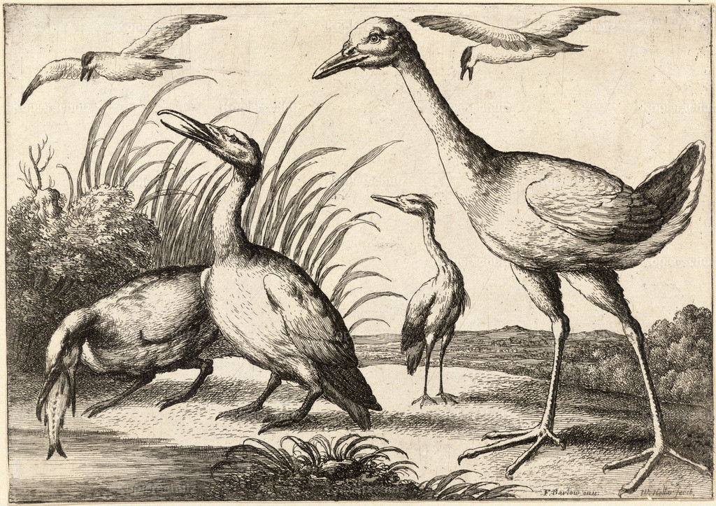 Wenceslas_Hollar_-_Water-birds