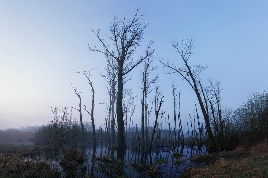 Unheimliche Stimmung | Tote Bäume an der K8 bei Ritterhude.