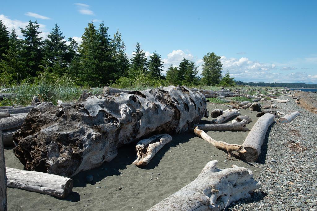 Angeschwemmte Bäume, Quadra Island, Canada