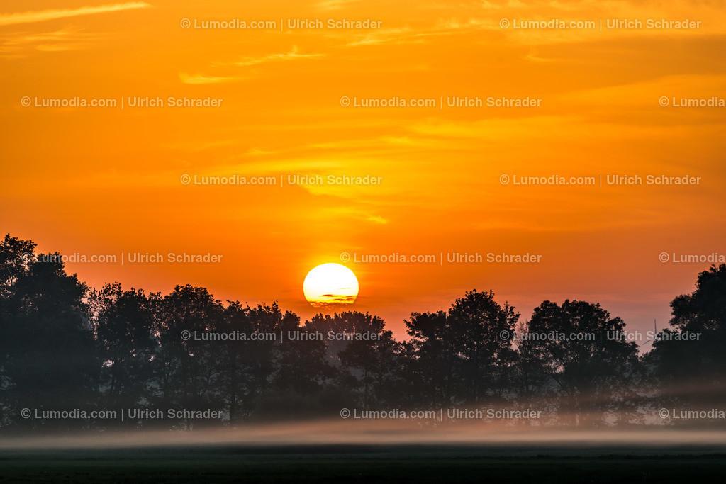10049-10352 - Morgens im Großen Bruch | max. Auflösung 7360 x 4912