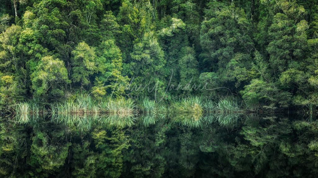 Grüne Spiegelung