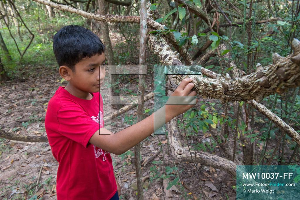 MW10037-FF | Kambodscha | Siem Reap | Reportage: Sombath erkundet Angkor | Sombath staunt über die Liane mit Stacheln.  Der achtjährige Sombath lebt in Kambodscha im Dorf Anjan, sechs Kilometer westlich von Siem Reap entfernt. In seiner Freizeit nimmt ihn manchmal sein Onkel in die berühmte Tempelanlage von Angkor mit. Besonders mag er die riesigen Wurzeln der Kapokbäume, die auf den alten Mauern wachsen. Seine Lieblingstempel in Angkor sind Ta Prohm, Banteay Kdei und Preah Khan.  ** Feindaten bitte anfragen bei Mario Weigt Photography, info@asia-stories.com **