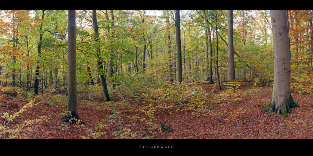Buchenwald Steigerwald | Herbst im Buchenwald Steigerwald