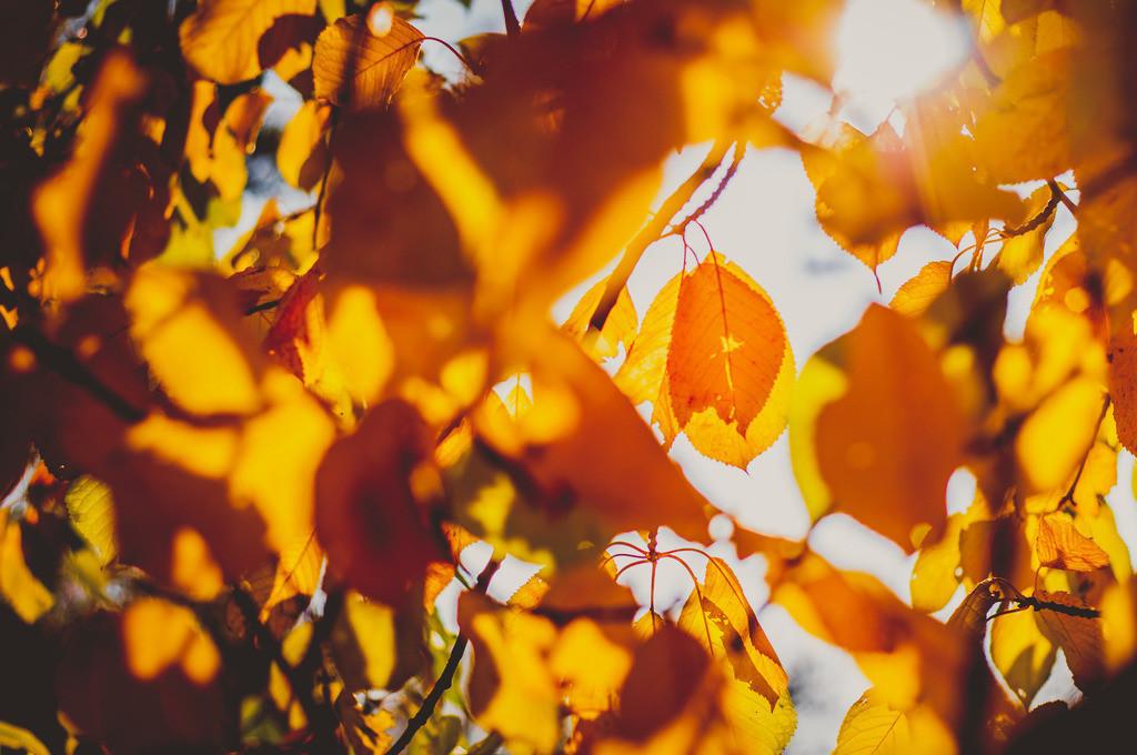 Goldener Herbst | Herbst, Jahreszeit, Natur, Landschaft, warme Farben, bunt, Vergänglichkeit