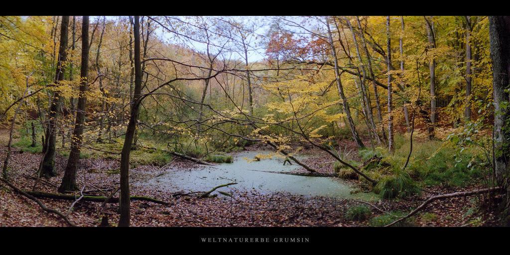 Weltnaturerbe Grumsin | Moor mit Buchen und Birken im Weltnaturerbe Buchenwald Grumsin im Herbst