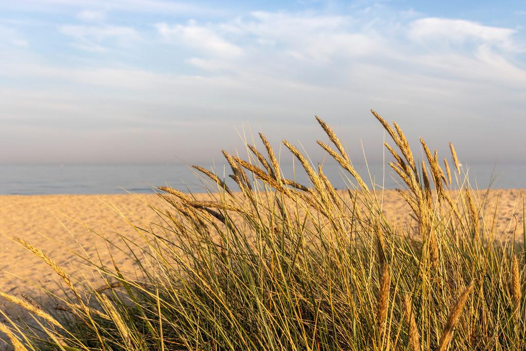 Strand in Weidefeld | Strandhafer am Strand in Weidefeld