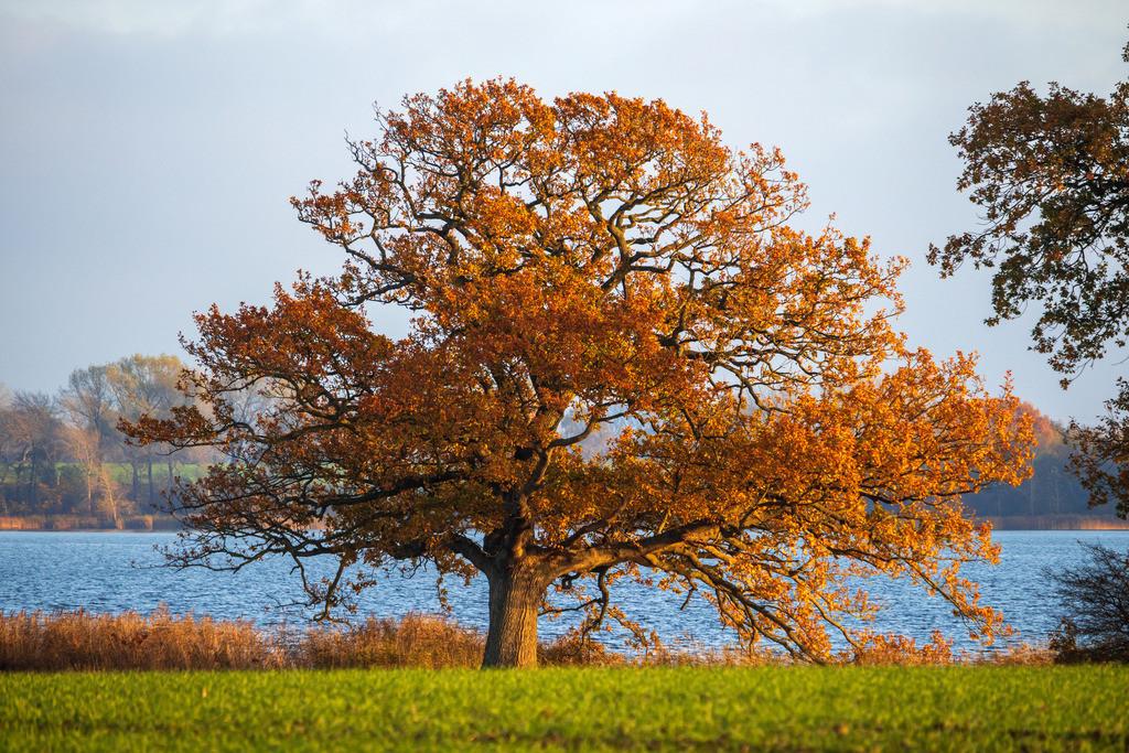 Boren an der Schlei   Boren an der Schlei im Herbst