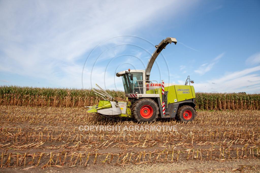 20080914-IMG_8928 | Silomais wird gehäckselt - AGRARFOTO Bilder aus der Landwirtschaft