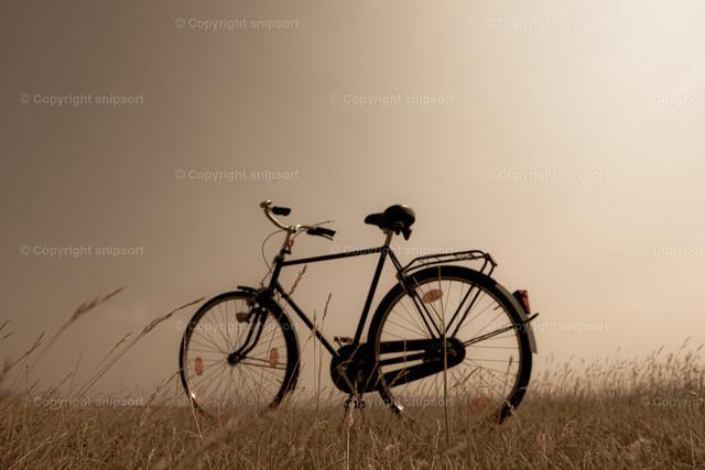 Nostalgie | Ein altes Fahrrad im Retro-Look in der Natur