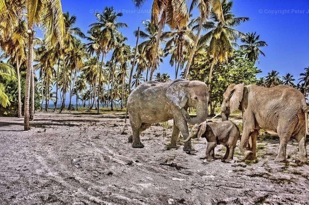 ElephantLand
