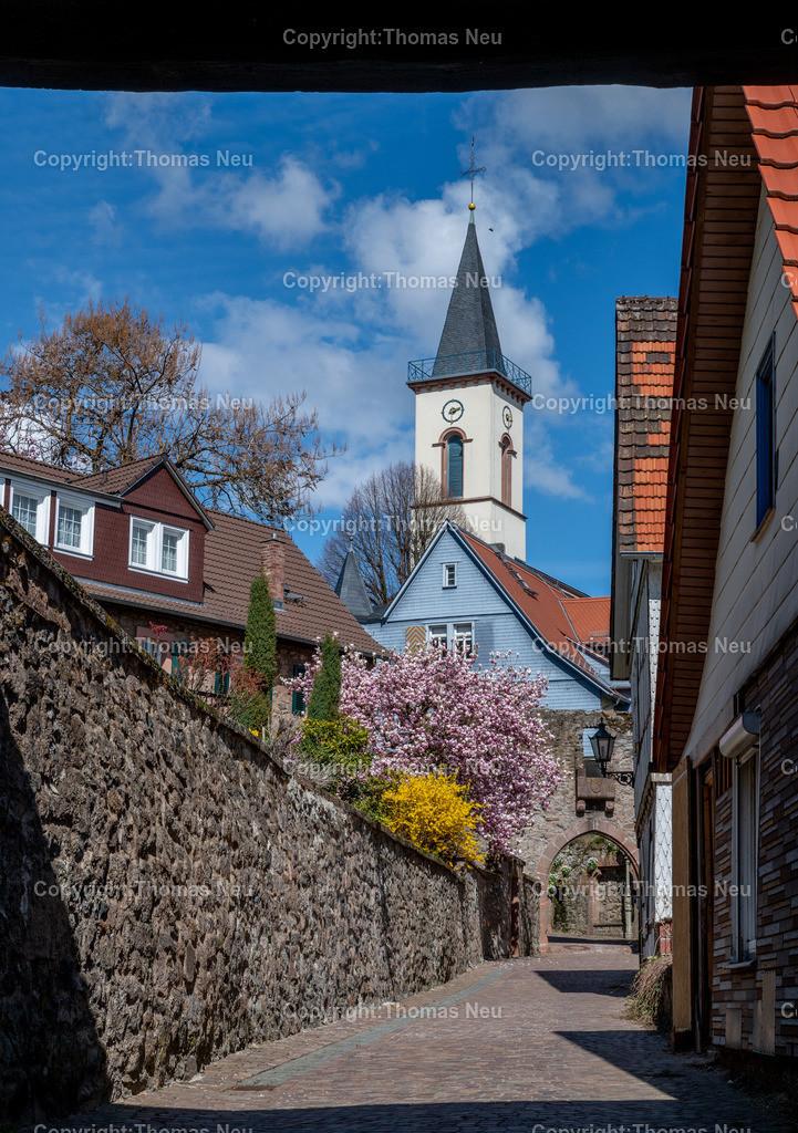 DSC_3205 | Lindenfels, Frühlingslaune in der Burgstadt, überall blüht es auf , Magnolien und Forsythien in  der Altstadt zwischen Fürther Tor und dem inneren Stadttor , Bild: Thomas Neu