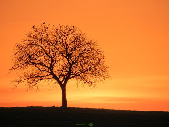 Himmel brennt   Wunderschöner Baum unter brennendem Abendhimmel