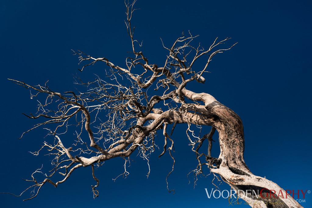 Baum / Madeira