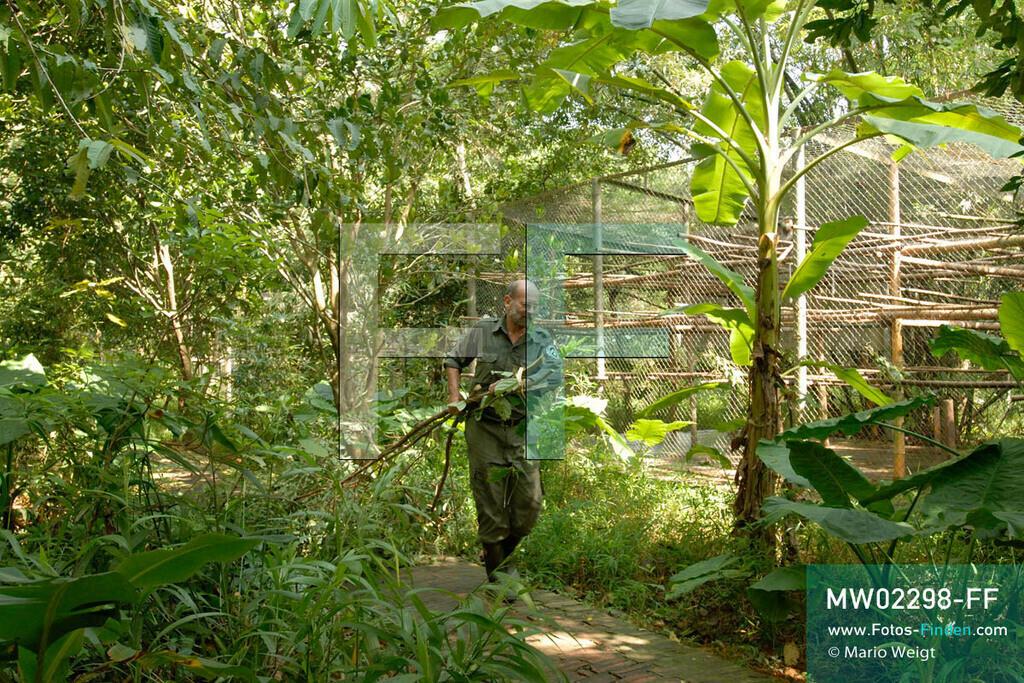 MW02298-FF | Vietnam | Provinz Ninh Binh | Reportage: Endangered Primate Rescue Center | Der Deutsche Tilo Nadler leitet das Rettungszentrum für gefährdete Primaten im Cuc-Phuong-Nationalpark.   ** Feindaten bitte anfragen bei Mario Weigt Photography, info@asia-stories.com **