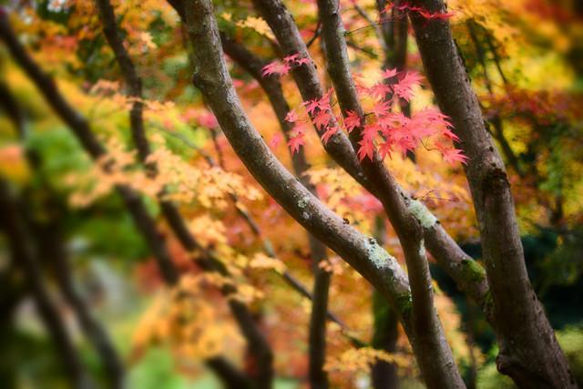 Farbenspiel des Herbsts | Jedes Jahr zum Herbst verwandelt sich der Wald in bunte Mischung von grünen, gelben, orangenen und roten Farbtönen.