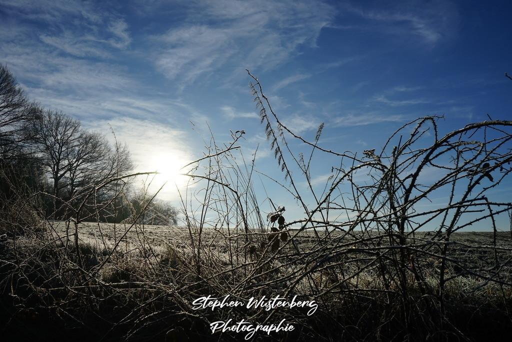 DSC05070_Winterbild_Brombeerenstrauch