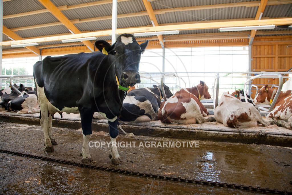20110627-IMG_3025 | Milchkühe im Boxenlaufstall