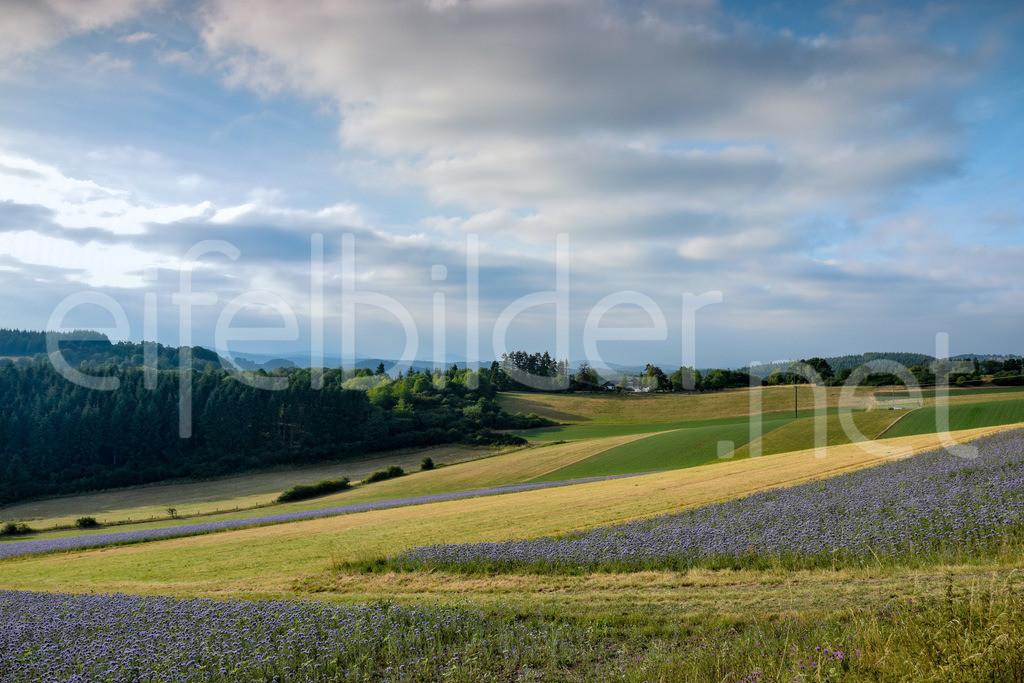 Eifellandschaft im Abendlicht | Wiesen, Felder und Wälder fotografiert bei Tettscheid in der Eifel (Vulkaneifel)