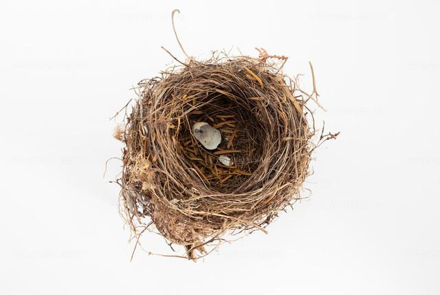 Vogelnest (isoliert) | Ein Vogelnest über weißem Hintergrund (freigestellt)