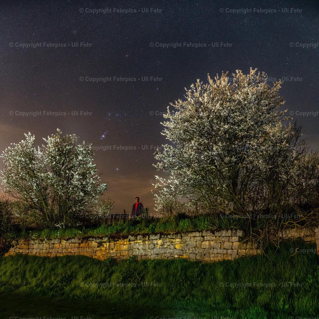 Nächtliche Blütenpracht | Weder Blüten noch Sterne ließen sich durch Corona beeinflussen und für Fotograühen war's in der Nacht ja auch ungefährlich ;-) Das Sternbild Orion überm Spielberg