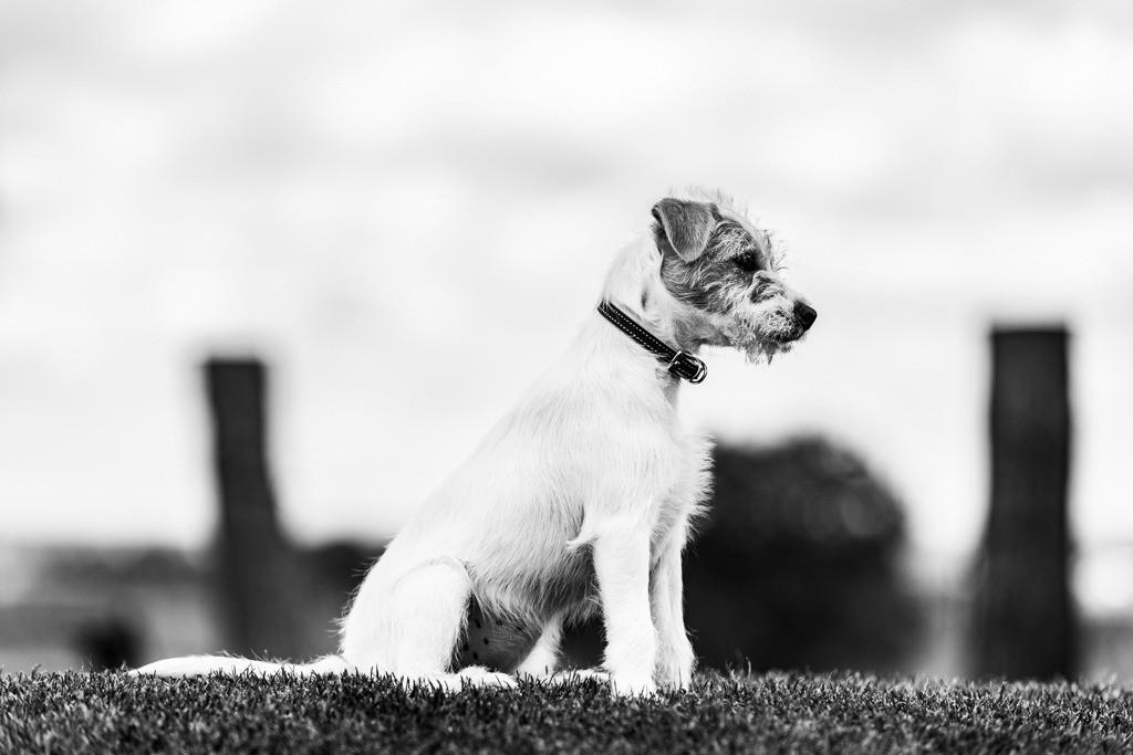 dogs--elmar.pics_5914