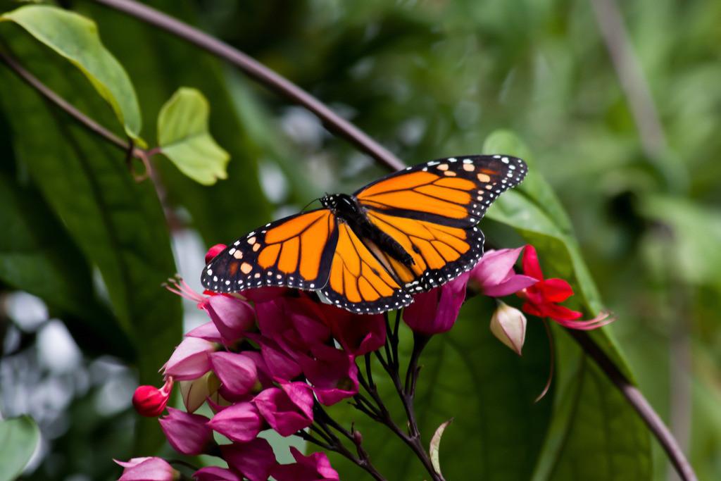 Farbenfroh | Schmetterling — Leichtgebilde aus Licht und Freude.  Else Pannek
