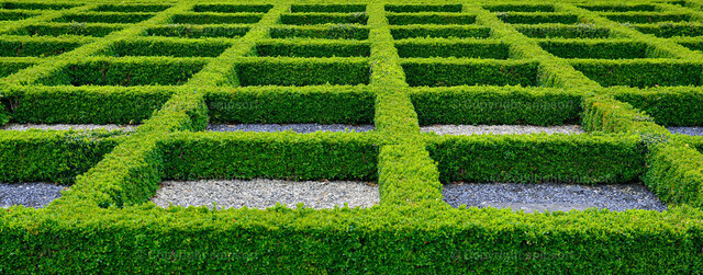 Irrgarten | Geometrisch exakt gepflanzte grüne Hecken.