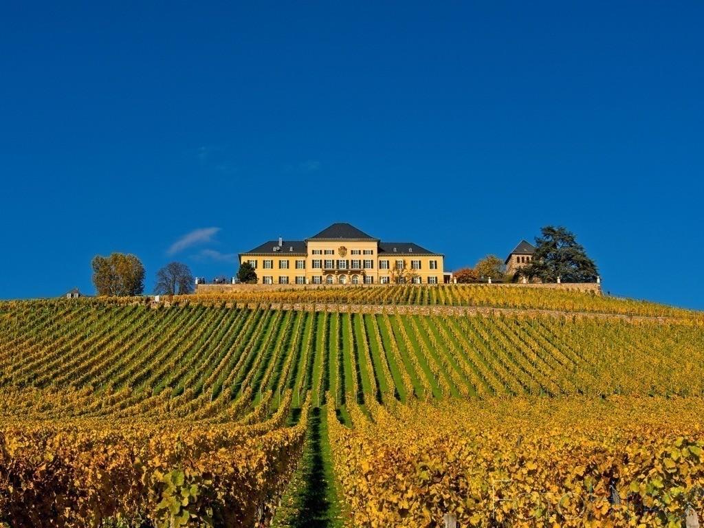 Schloss Johannisberg   Schloss Johannisberg im Rheingau. Seit 1200 Jahren wird hier Wein angebaut, seit 1720 ausschließlich Riesling.