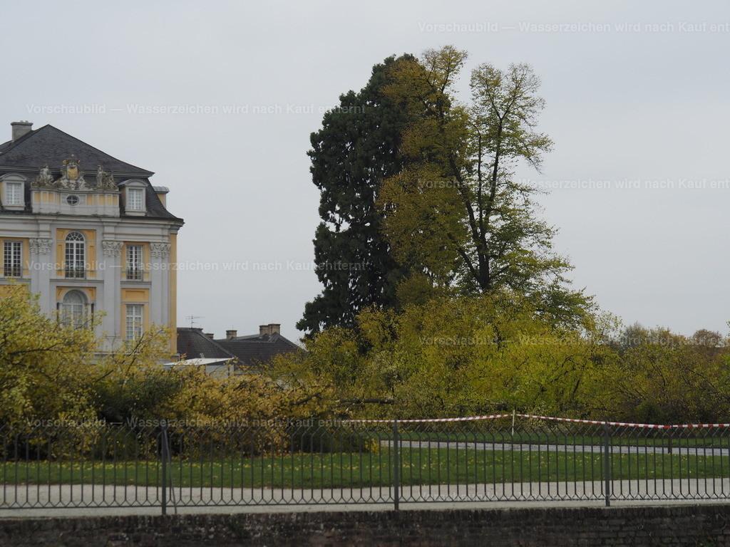 Last tree falling (4/10)