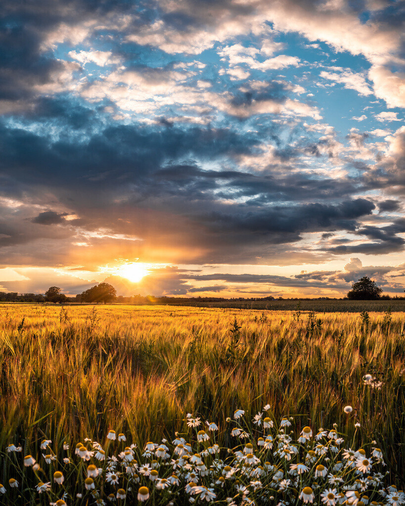 Summerfeeling im Ried | Wundervoller Sonnenuntergang über den Feldern im Ried bei Schwanau