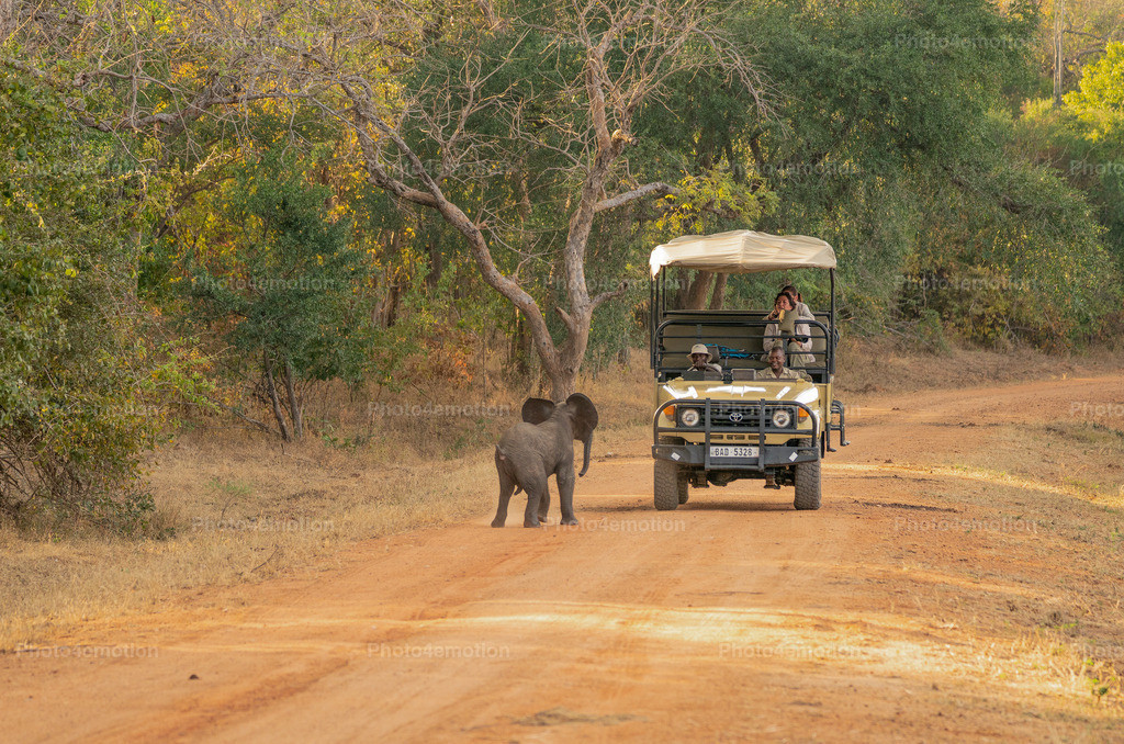 GRO05868 | South Luangwa and Lower Zambezi National Parks are among the greatest national parks in Africa and are an undisputed