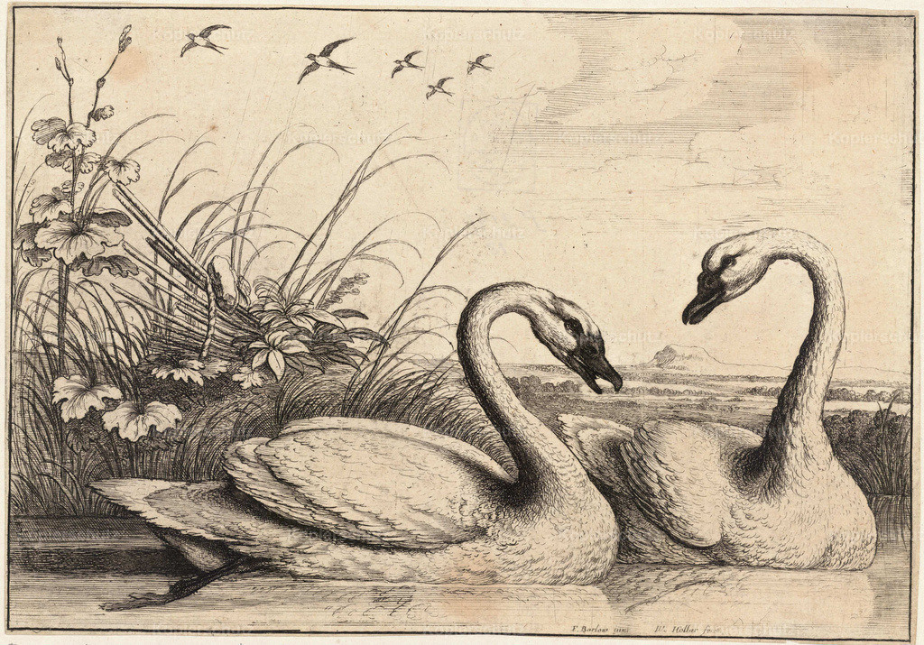Wenceslas_Hollar_-_Two_swans_(State_1)