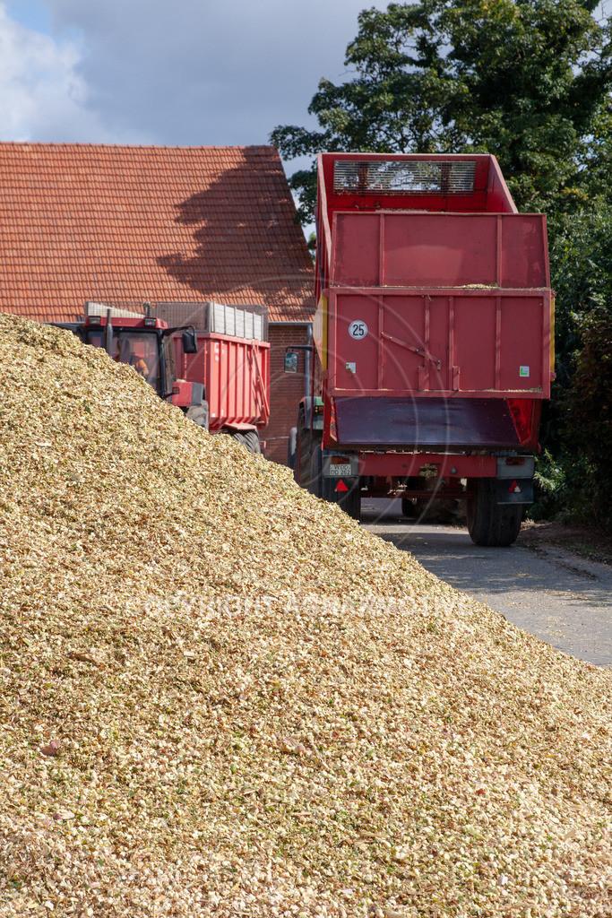 20080914-IMG_9091 | Silomais wird gehäckselt - AGRARFOTO Bilder aus der Landwirtschaft
