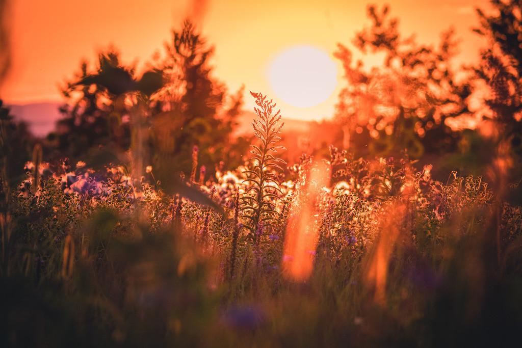 Sonnenuntergang über den Feldern im Ried