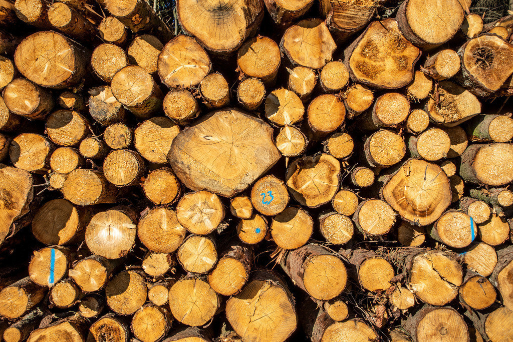 JT-181107-114 | Sauerland, Holzstapel, frisch geschlagene Bäume, Äste, gestapelt,  bei Schmallenberg,