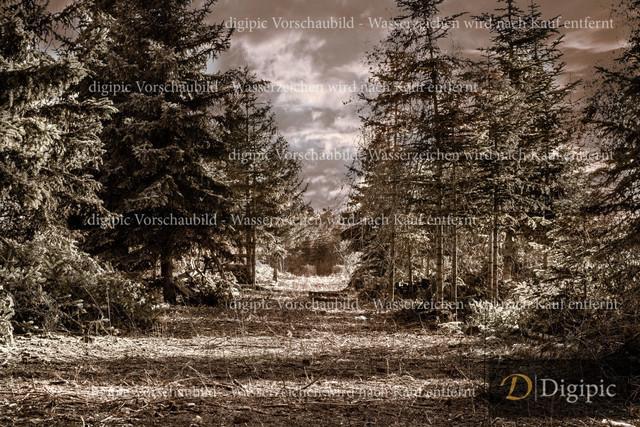 Wald 1-Vorschaubild