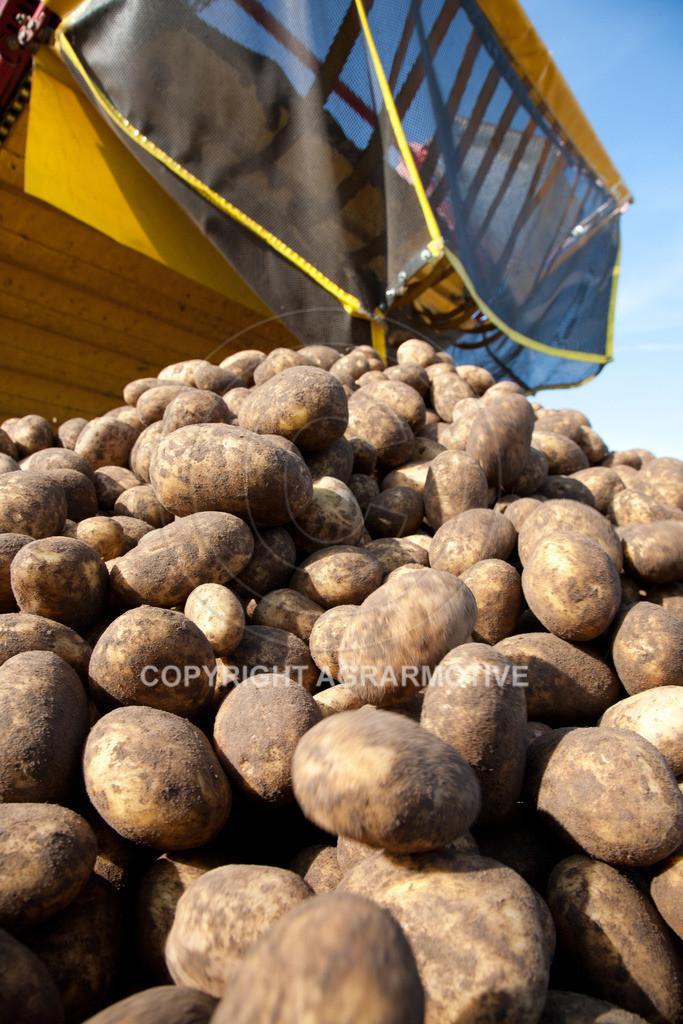 20110929-IMG_5986 | Ernte auf einem Kartoffelfeld - AGRARBILDER