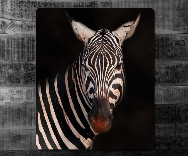 ZEBRA | Kenia