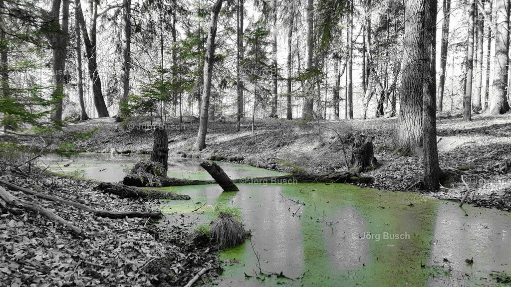 Wald_9_Partielle Farbe