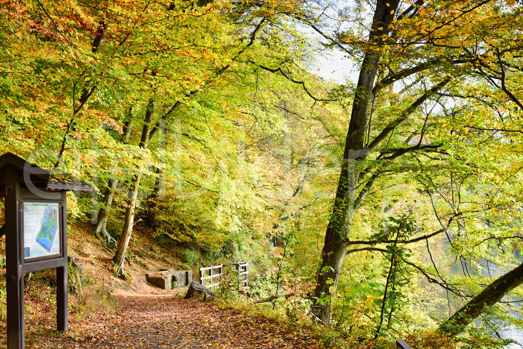 Wanderweg am Ulmener Maar | Ulmen, Eifel / Vulkaneifel