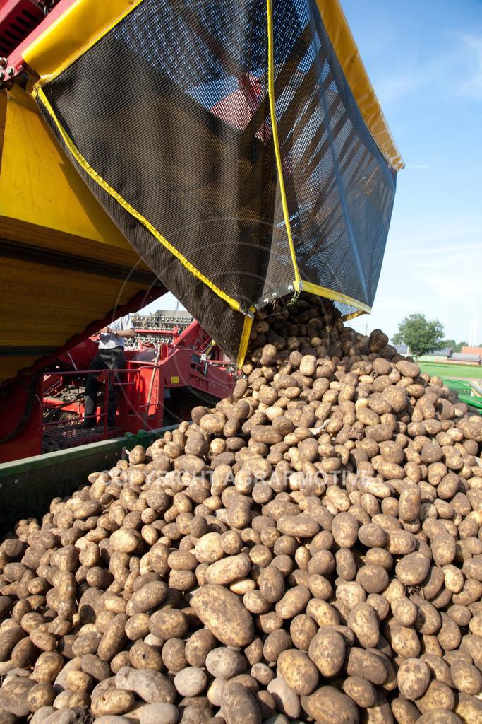 20110929-IMG_5978 | Ernte auf einem Kartoffelfeld - AGRARBILDER