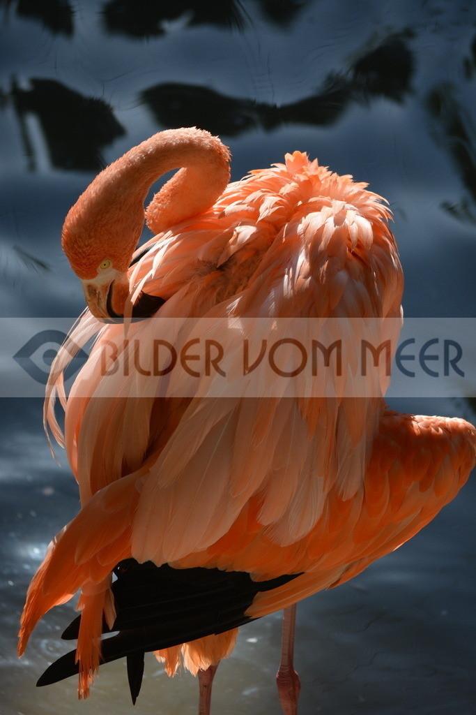 Fotoausstellung Meer Bilder | Flamingo Konzentrationbei Sonnenuntergang